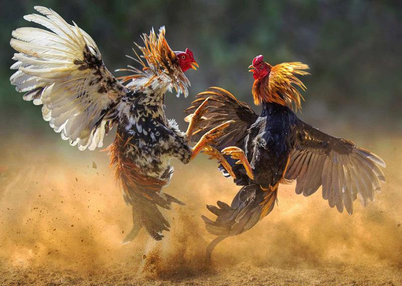 Tips Menghemat Uang Saat Bermain Judi Online Di Situs Sabung Ayam S128